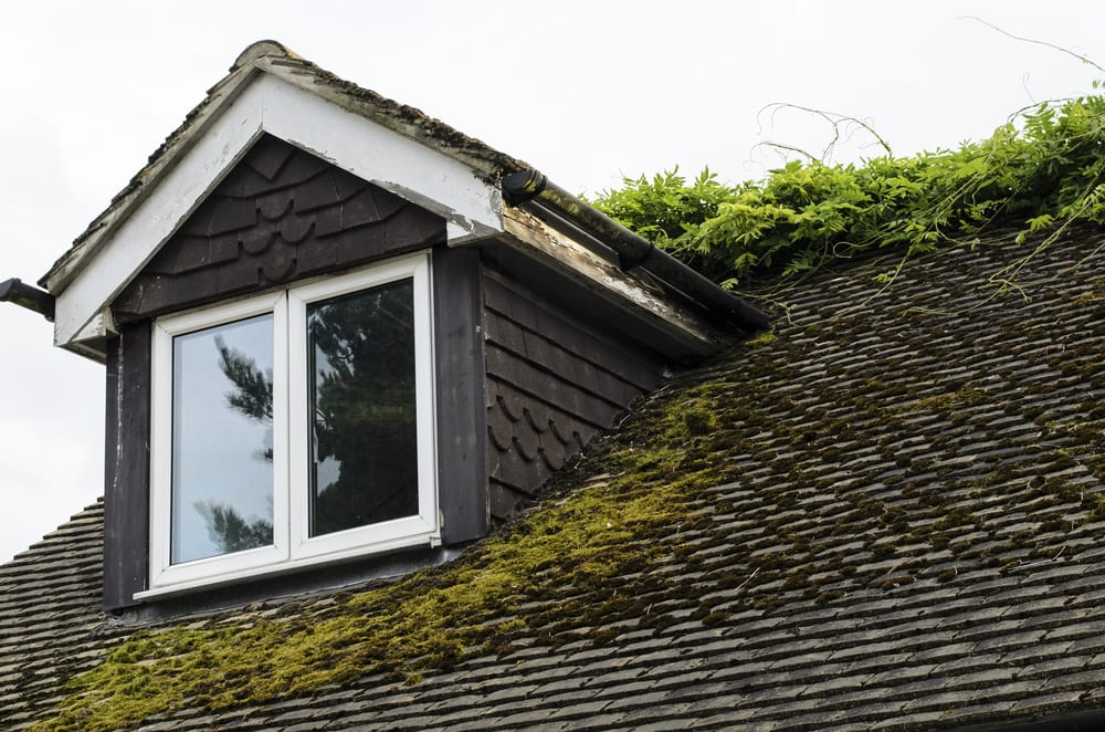 Prevent Moss From Growing On Your Roof